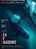 暗海 海豚守護戰Sea of Shadows
